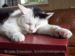 Frida sover
